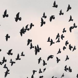 Para nuestro servicio de control de aves trabajamos con todo tipo de sistemas anti-aves. Con el fin deconseguir que las aves dejen de ser una molestia.